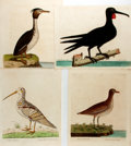 """Books:Natural History Books & Prints, Eleazar Albin. Four Hand-Colored Bird Etchings. English, ca. 1730s. Includes: """"The White Woodcock"""" (Plate 85); """"The Small W..."""