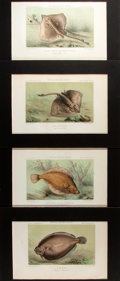 Books:Natural History Books & Prints, Four Color Lithographs Depicting Sea Life. Uniformly matted to an overall size of 12.75 x 9 inches. Fine. ...