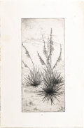 Texas:Early Texas Art - Drawings & Prints, MARGARET CARRUTH SCRUGGS (1892-1988). Yucca. Etching. 7.5in.x 3.5in.. Unsigned. One of the most important etchers in ...