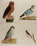 """Books:Prints & Leaves, Group of Four Hand-Colored Bird Prints. 1735 to 1737. 9"""" x 11.5"""".Removed from a larger volume with three leaves of text. Li..."""