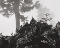 ANSEL ADAMS (American, 1902-1984) Tree, Stump and Mist, Northern Cascades, Washington, from Portfolio VII,<