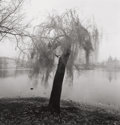 Photographs, MICHAEL KENNA (British/American, b. 1953). Moving Tree, Prague, Czechoslovakia, 1992. Gelatin silver, 1994. 7-3/4 x 7-1/...