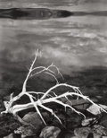 Photographs, ANSEL ADAMS (American, 1902-1984). White Branches, Mono Lake from Portfolio VII, 1950. Gelatin silver, printed 1976. 19-...