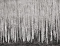 Photographs, JOHN SEXTON (American, b. 1953). Sea of Aspen, Dolores River Canyon, Colorado, 1987. Gelatin silver print, 1990. 9-5/8 x...