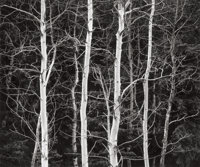 JOHN SEXTON (American, b. 1953) Listen to the Trees, 1985 Gelatin silver, 1994 9-3/4 x 11-3/4 inc
