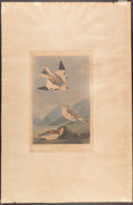 Books:Natural History Books & Prints, John James Audubon (1785-1851). Snow Bunting - Plate CLXXXIX(Havell Edition). Hand-colored aquatint engraving....