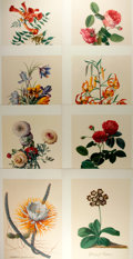 Books:Natural History Books & Prints, George Ehret. Group of Eight Modern Reproductions of Color Lithographs Depicting Flowers. Measures 12.25 x 17 inches. Fine. ...