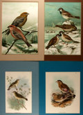 Books:Natural History Books & Prints, Group of Four Handsome Chromolithographs Depicting Birds. Colorfully matted to an overall size of 11.75 x15.5 inches. Fine....