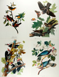 Books:Natural History Books & Prints, Four Modern Reproductions of Color Lithographs Depicting Birds. Measures 14 x 17 inches. Fine. ...
