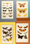 Books:Natural History Books & Prints, Group of Four Color Lithographs Depicting a Colorful Variety of Butterflies. Colorfully matted to various sizes; largest is ...