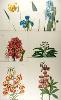 Books:Natural History Books & Prints, [Trew, Redoute, Bateman]. Group of Seven Modern Color Lithographs after Prints by Pierre-Joseph Redoute, C.J. Trew and James B...