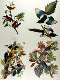 Books:Natural History Books & Prints, Group of Four Modern Color Prints Depicting Birds. Measures 14 x 17 inches. Some handling wear, else fine. . ...