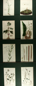 Books:Natural History Books & Prints, [Natural History]. Group of Eight Original Hand-Colored Lithographs Depicting Various Plants. Uniformly matted to an overall...