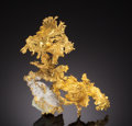 Minerals:Cabinet Specimens, NATIVE GOLD. Diltz Mine, Whitlock District, Mariposa Co.,California, USA. ... (Total: 2 Items)