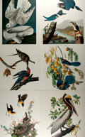 Books:Natural History Books & Prints, Group of Six Modern Reproductions of Color Lithographs Depicting Birds. Measures 14 x 17 inches. One displays some areas of ...