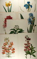Books:Natural History Books & Prints, [Trew, Redoute, Bateman]. Group of Seven Modern Reprints after Works by C.J. Trew, P.J. Redoute, and J. Bateman. Measurement...