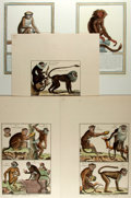 Books:Natural History Books & Prints, Group of Five Modern Hand-Colored Engravings Depicting Monkeys. Various sizes; largest measures 14.75 x 21.75 inches. Fine. ...