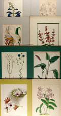 Books:Natural History Books & Prints, Group of Eight Chromolithographs Depicting Flowers. Some have hand-coloring. N.d., mid-19th to mid-20th century. Various...
