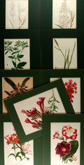 Books:Natural History Books & Prints, Group of Nine Chromolithographs Depicting Flowers, Five of Which are Hand-Colored. N.d., mid-19th to mid-20th century. Unifo...