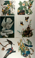 Books:Natural History Books & Prints, Group of Six Modern Color Lithographs Depicting Various Birds. Measure 14 x 17 inches. Some wrinkling. Near fine. . ...