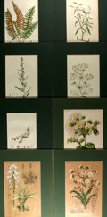 Books:Natural History Books & Prints, Group of Eight Chromolithographs Depicting Flowers. Five have hand-coloring. Uniformly matted to an overall size of 10 x 13....