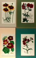 Books:Natural History Books & Prints, Group of Four Hand-Colored Lithographs Depicting Various Flowers. Colorfully matted to various sizes; largest measures 10. x...