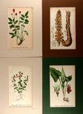 Books:Natural History Books & Prints, Group of Four Hand-Colored Lithographs Depicting Various Plants. Colorfully matted to various sizes; largest measures 10.5 x...