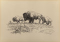 Texas:Early Texas Art - Drawings & Prints, HAROLD DOW BUGBEE (American, 1900-1963). Buffalo, 1961. Penand ink on paper. 9-1/2 x 13-1/2 inches (24.1 x 34.3 cm) (si...