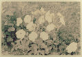 Photography, MARK COHEN (American, b. 1943). Untitled (Flowers), 1977. Ektacolor print. 13 x 18-3/4 inches (33.0 x 47.6 cm) (sight). ...
