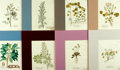 "Books:Prints & Leaves, Group of Eight 19th Century Hand-Colored Engravings of Plants.Colorfully and uniformly matted to an overall size of 12.5"" x..."