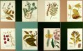 """Books:Prints & Leaves, Group of Eight Hand-Colored Engravings of Plants. Colorfully anduniformly matted to an overall size of 12.5"""" x 15"""". Fine. ..."""