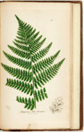 Books:Natural History Books & Prints, [John Sowerby]. Charles Johnson. The Ferns of Great Britain.London: John E. Sowerby, 1855. Full illustrated with ha...