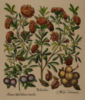 """Books:Natural History Books & Prints, Modern Hand-Painted Lithograph Depicting Flowers. Measures 21.75"""" x 25.75"""". Very good. . ..."""