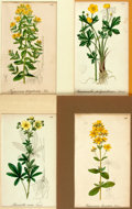 """Books:Prints & Leaves, Group of Four Hand-Colored Engravings of Flowers. Colorfully mattedto various sizes; largest measures 14.5"""" x 11.5"""". Very g..."""