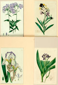 """Books:Prints & Leaves, Group of Four Hand-Colored Engravings of Flowers. Colorfully mattedto an overall size of 10.25"""" x 13.5"""". Very good. . ..."""