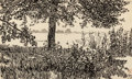 Fine Art - Work on Paper:Drawing, MAYNARD DIXON (American, 1875-1946). Study of Foliage #2 (Underthe Cottonwoods), 1893. Pen and ink on paper. 4-3/4 x 7-...
