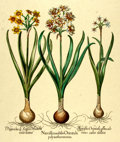 """Books:Natural History Books & Prints, Large Modern Hand-Colored Lithograph of Flowers. Measures 19.5"""" x 27.5"""". Fine. . ..."""