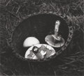 Fine Art - Painting, Russian, IRENE FAY (Russian, 1914-1986). Field of Mushrooms, circa1975. Gelatin silver. 3-1/4 x 3-5/8 inches (8.3 x 9.2 cm). Sig...