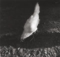 Photographs:Gelatin Silver, IRENE FAY (Russian, 1914-1986). A White Chicken, circa 1975. Gelatin silver. 3-1/4 x 3-1/2 inches (8.3 x 8.9 cm). Signed...