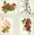 """Books:Natural History Books & Prints, Group of Four Modern Chromolithographs of Flowers. Uniformly matted to an overall size of 12.5"""" x 15"""". Very good. . ..."""
