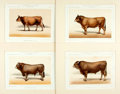 "Books:Prints & Leaves, Victor Borie. Four Modern Chromolithographs of Cattle. Uniformlymatted to an overall size of 16"" x 13"". Very good. . ..."
