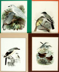 "Books:Natural History Books & Prints, Group of Four Chromolithographs of Birds. Colorfully matted to various sizes; largest measures 15."" x 12"". Very good. . ..."