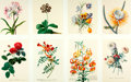 Books:Prints & Leaves, [Georg Dionysius Ehret]. Group of Eight Modern Reprints of Flowersafter Works by Ehret. Measure 17 x 12.25 inches. Very goo...