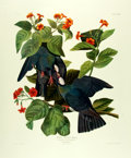 Books:Prints & Leaves, John James Audubon. Marvelous Double Elephant Folio Reprint of Color Engraving, White-Crowned Pigeon. From a limited...