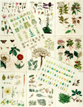 Books:Natural History Books & Prints, Oliver Goldsmith. Eleven Hand-Colored Engravings from A History of the Earth and Animated Nature. London: R. Edw...