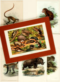 Books:Prints & Leaves, Large Group Lot of Prints Depicting Animals. Most matted. Varioussizes. Very good. . ...