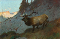 CARL CLEMENS MORITZ RUNGIUS (American, 1869-1959) Olympic Elk Oil on canvas 30 x 46-1/4 inches (7