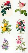 Books:Natural History Books & Prints, [Ehret, Redoute et al]. Large Group of Facsimile Prints after Paintings of Flowers by Ehret, Redoute et al. Most measure abo...