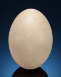 Fossils:Aves (Birds), EXTINCT ELEPHANT BIRD EGG. Aepyornis maximus.Madagascar. ...