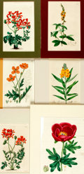 """Books:Natural History Books & Prints, Group of Six Hand-Colored Engravings of Flowers. 1817-1826. Colorfully matted to various sizes; largest measures 11.5"""" x 14...."""